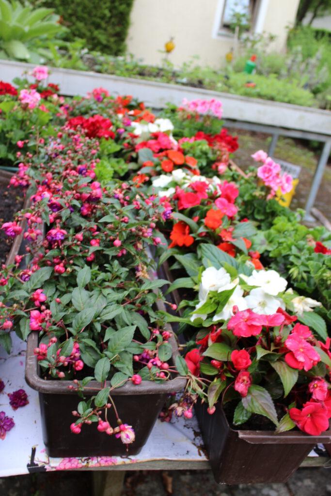 Hochbeete und Blumenkästen